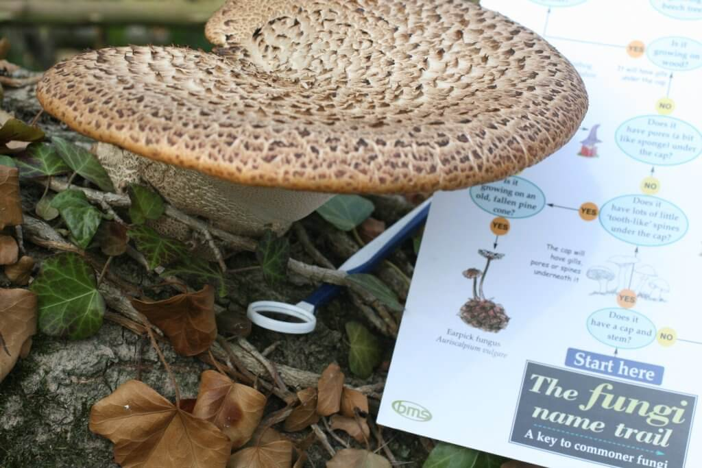 Fungus Facts Information Sheets