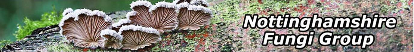 Nottinghamshire Fungi Group.jpg