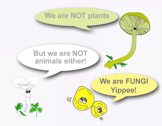 We are not plants or animals