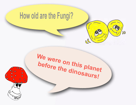 How old are Fungi?